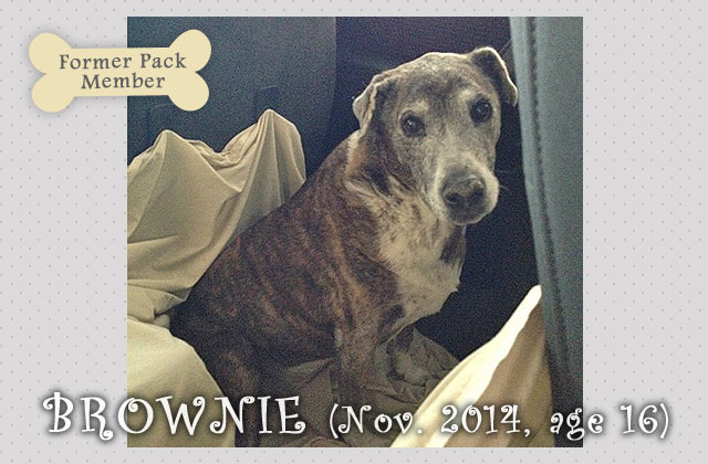 Brownie the Dog