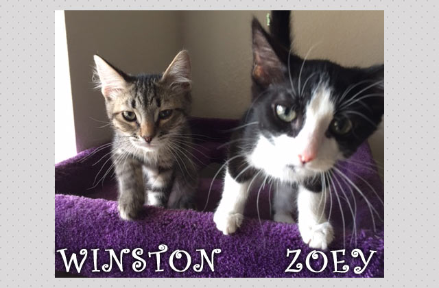 Winston and Zoey